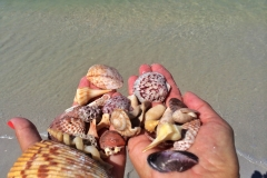 fort-myers-shelling-boat-cruise-1
