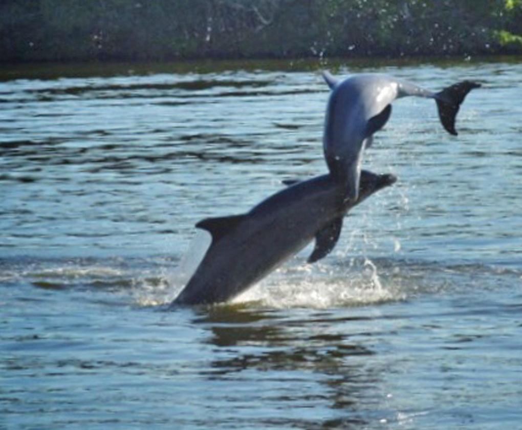 sunset dolphin u0026 wildlife cruise adventures in paradise 239